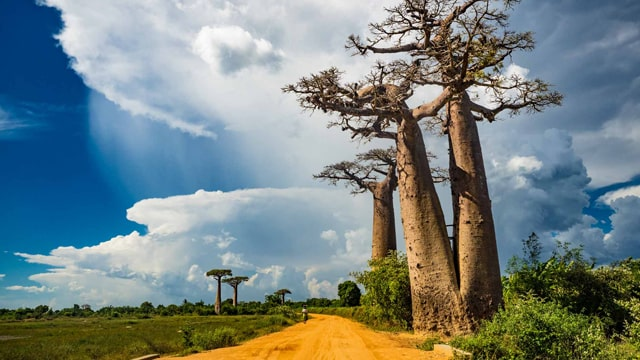 マダガスカルの景色1